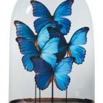 Decoratieve stolpen met vlinders in het interieur