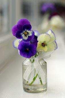 viooltje in vaas