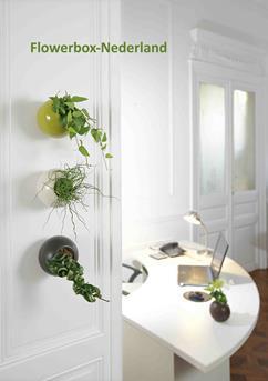 flowerbox planten