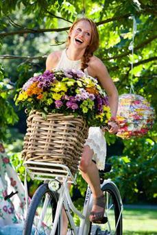 zomerchrysant