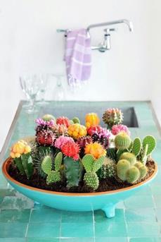 cactus grote pot