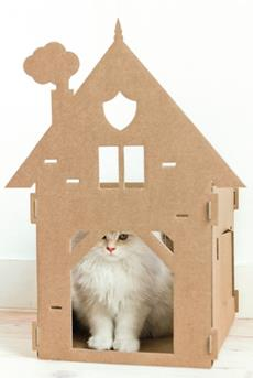 kat in huis