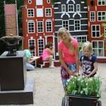 Tulpenland: tulpenbloei in de zomer