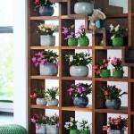 Kerstcactus Woonplant van de Maand november