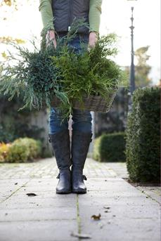 tuinplant december