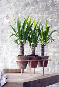 Yucca-DIY-tip: koperen plantenstandaard