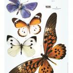 Vlinder muurstickers van Kek Amsterdam