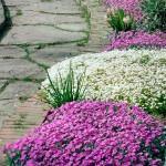 Muurbloemen: steengoed