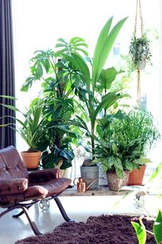 plantenlab
