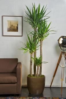 Interieur Inspiratie Grote planten in het interieur - Interieur ...