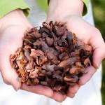 Duurzame cacaodoppen