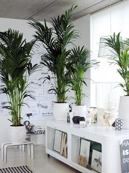 Interieur inspiratie grote planten in het interieur for Interieur beurs