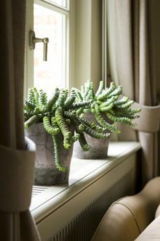interieur inspiratie vensterbanken: vol met planten en accessoires, Deco ideeën