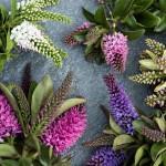 Kleurrijk vlindervoer