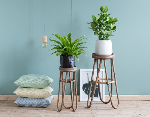Interieur Inspiratie Intratuin presenteert Top 8 hippe kamerplanten