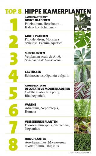 Grote Kamerplanten Intratuin.Interieur Inspiratie Intratuin Presenteert Top 8 Hippe Kamerplanten