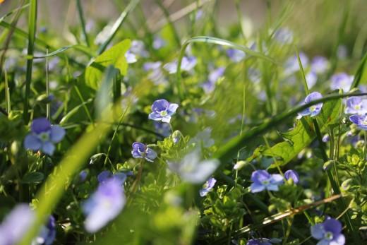 Bloemen in gras geur
