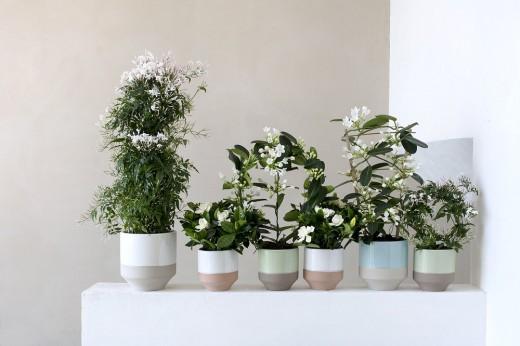 romanticus witte bloemen