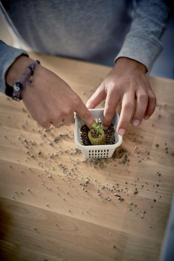 01_PH133372_IKEA_indoor_gardening