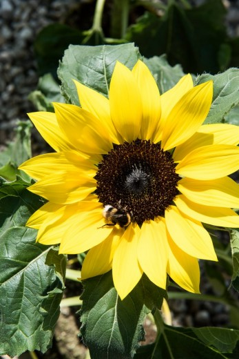 Sunsation_09_WEB