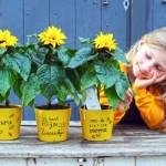 Zonnebloem 'Sunsation' bloeit door