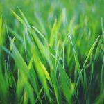 Wanneer moet je graszoden bemesten en welke soorten mest gebruik je.
