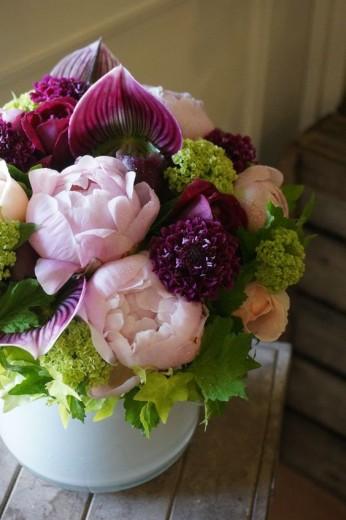 pioenrozen paars