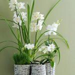 Laat je huis deze zomer opbloeien met de orchidee