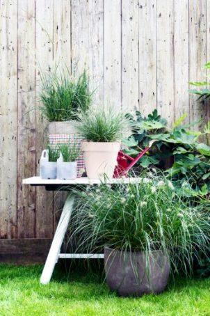 Sierlijke tuinborstels