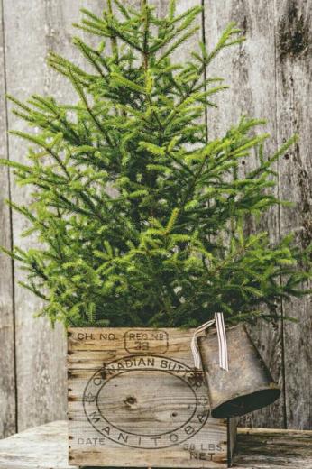 kerstboom-groen