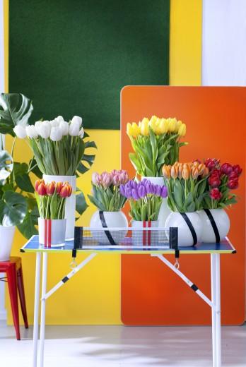 tulpen-kleur