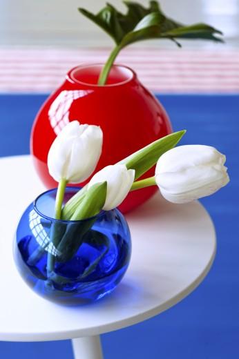 tulpen-wit