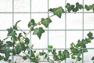 Natuurlijke decoratie voor je woning