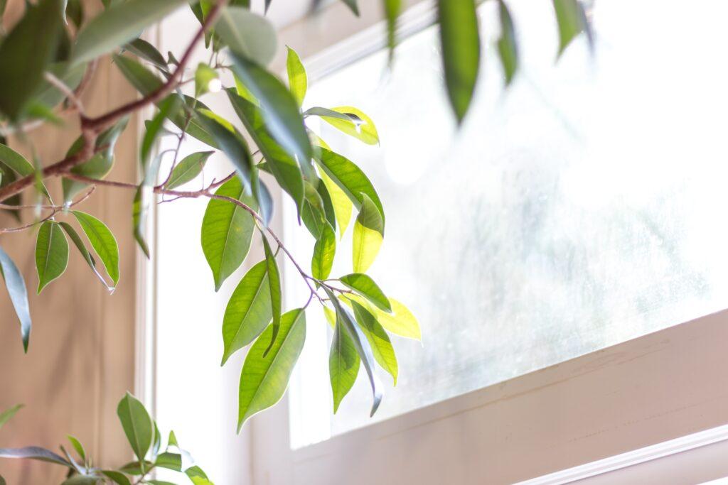 screendoeken voor je ramen