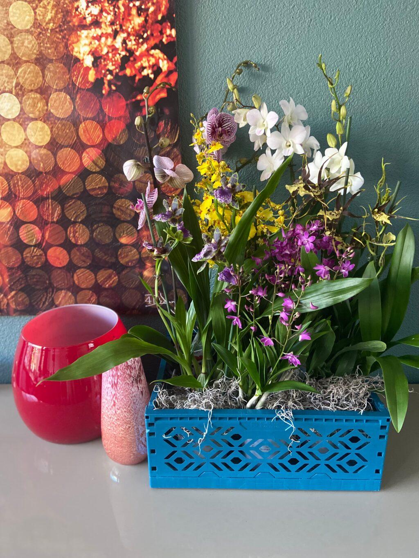 dag van de orchidee